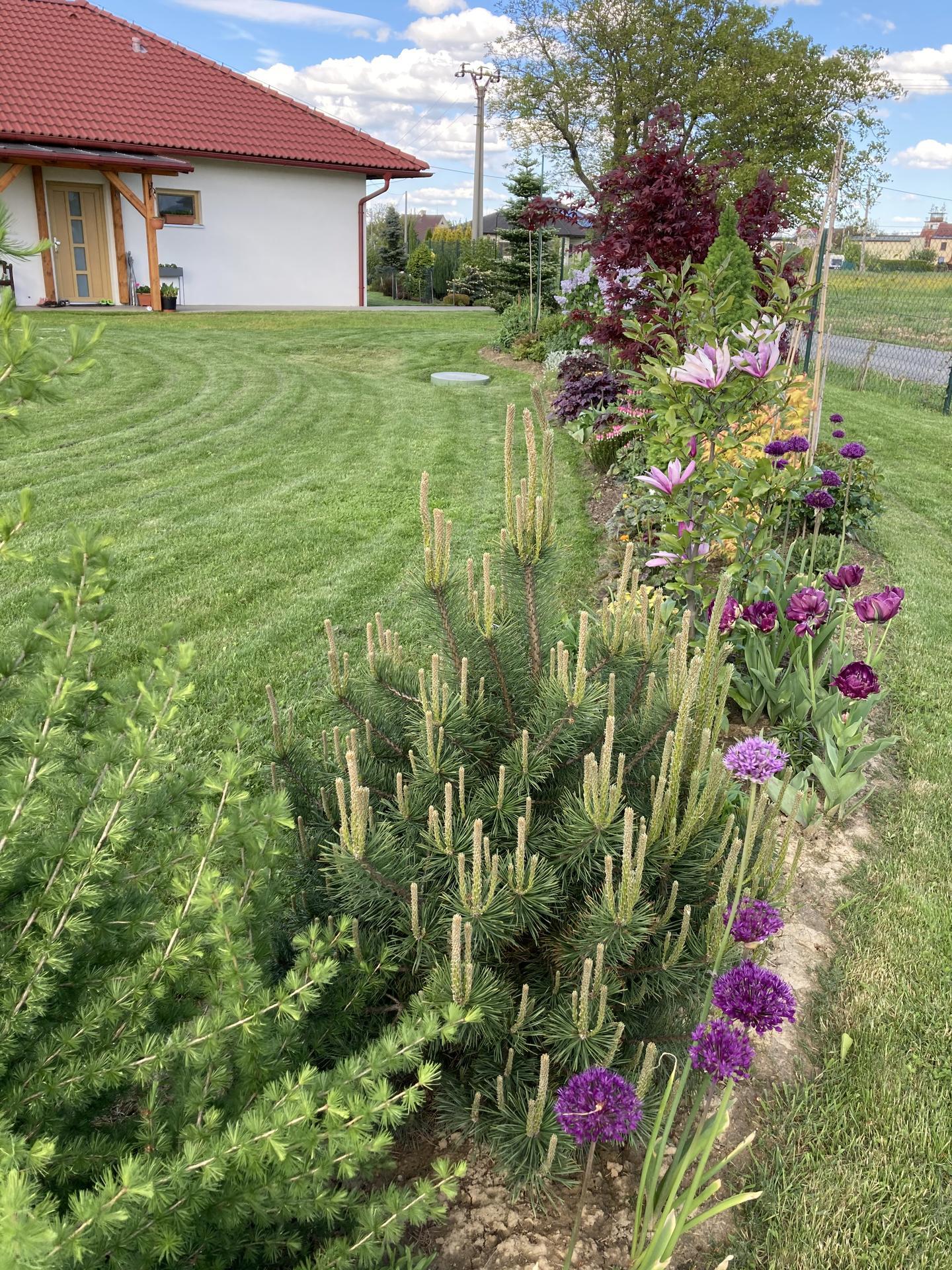 Šestý rok zahradničím - Obrázek č. 37