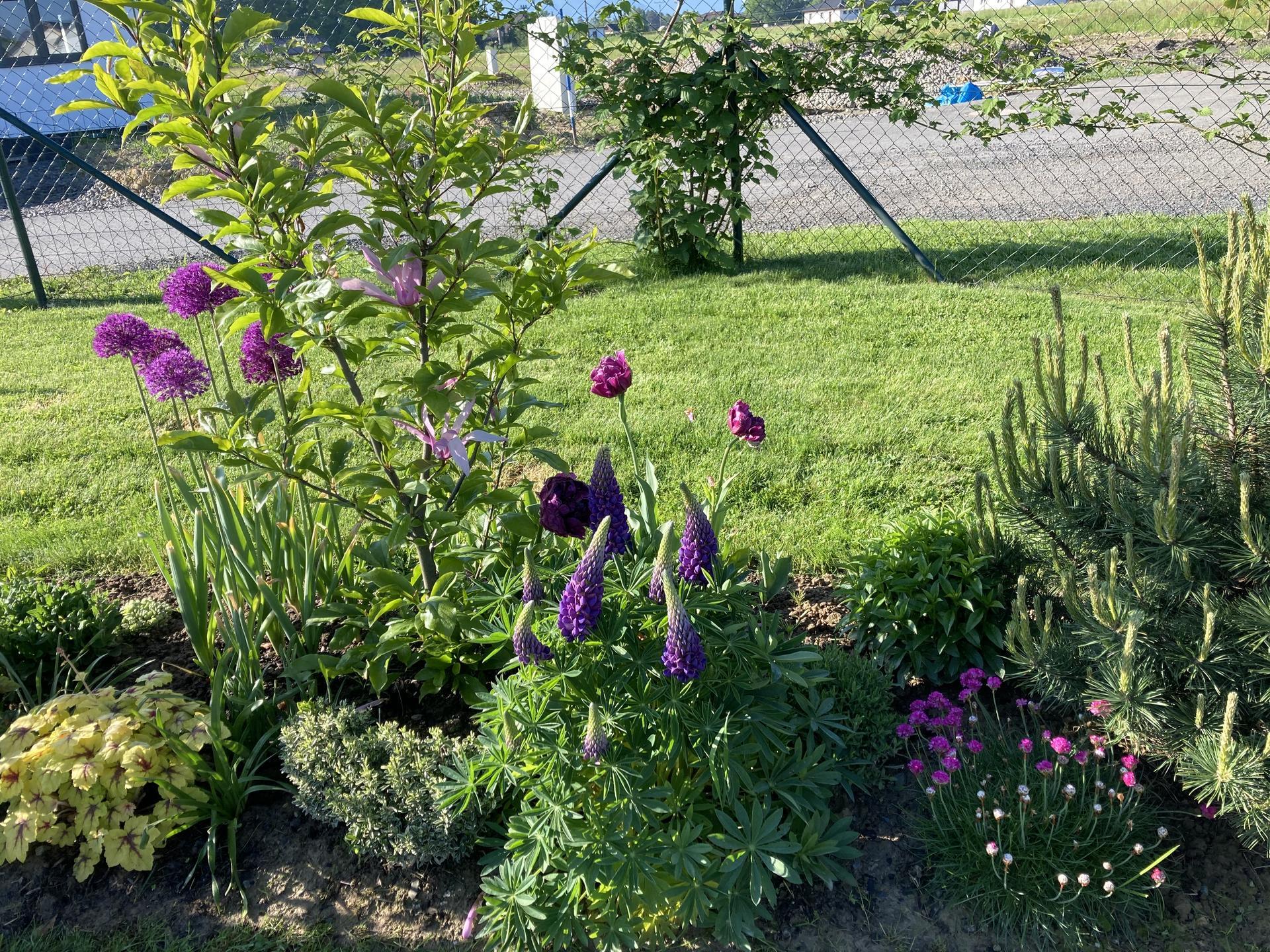 Šestý rok zahradničím - Obrázek č. 39
