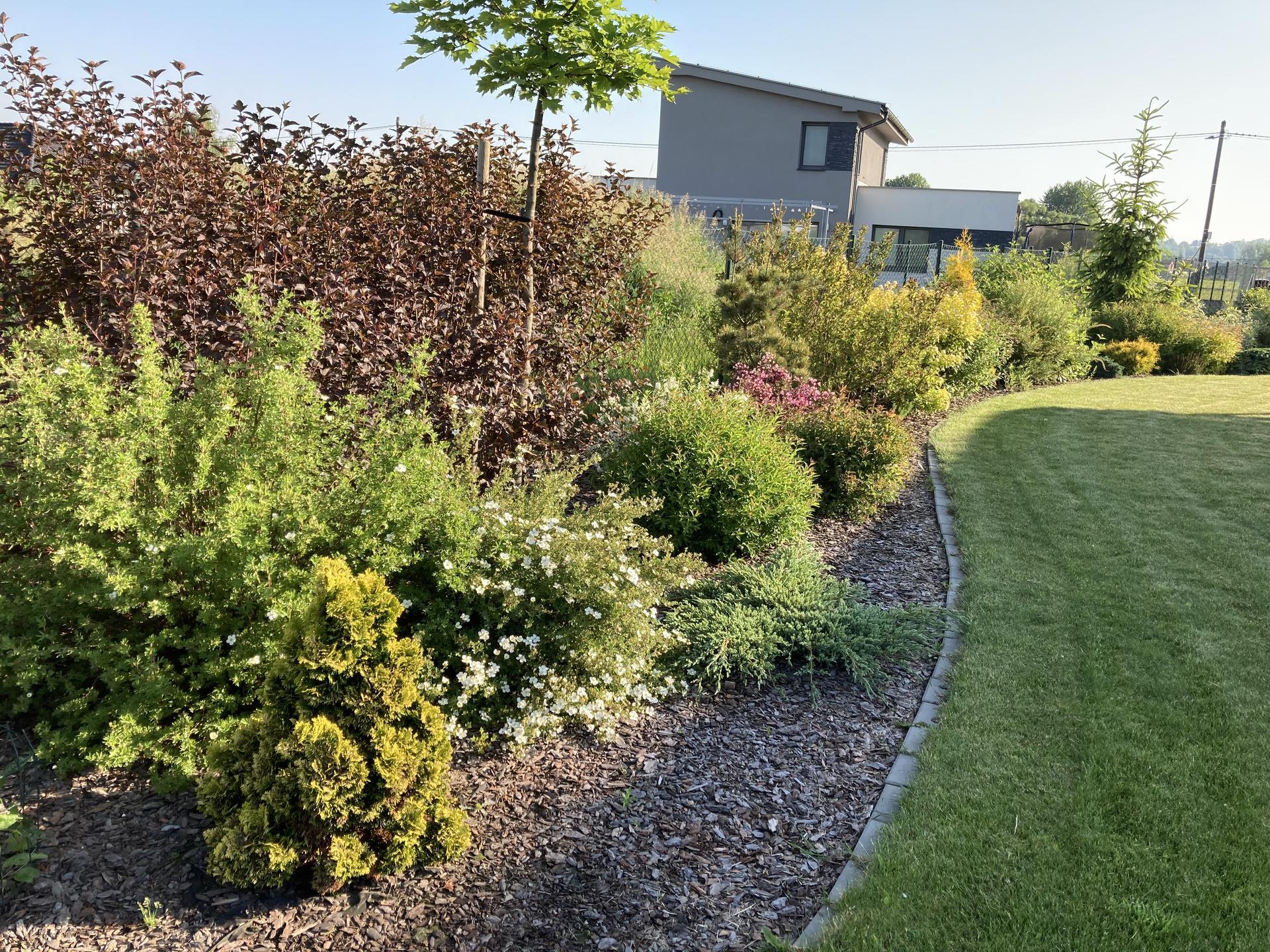Šestý rok zahradničím - Obrázek č. 41
