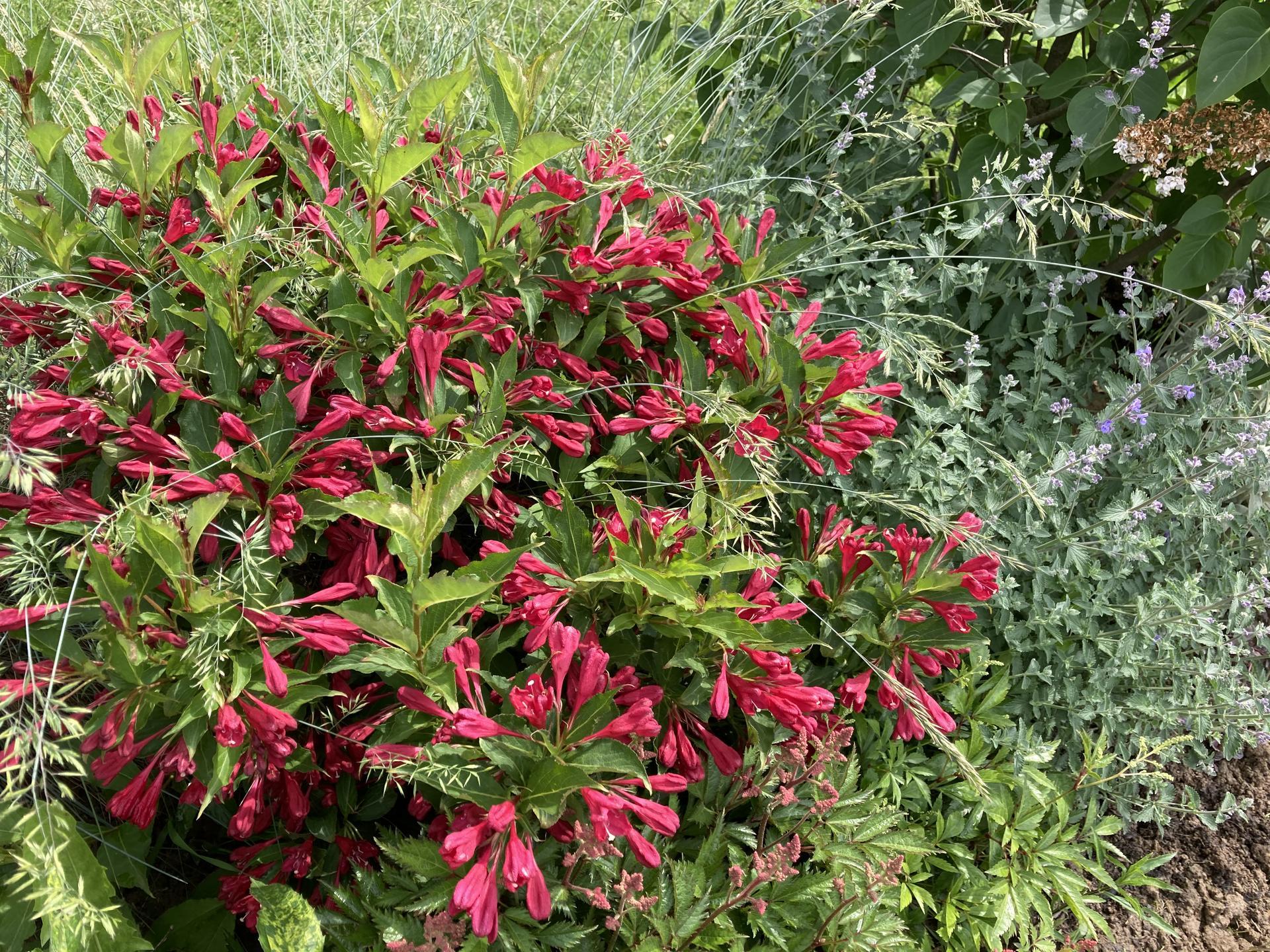 Šestý rok zahradničím - Obrázek č. 53