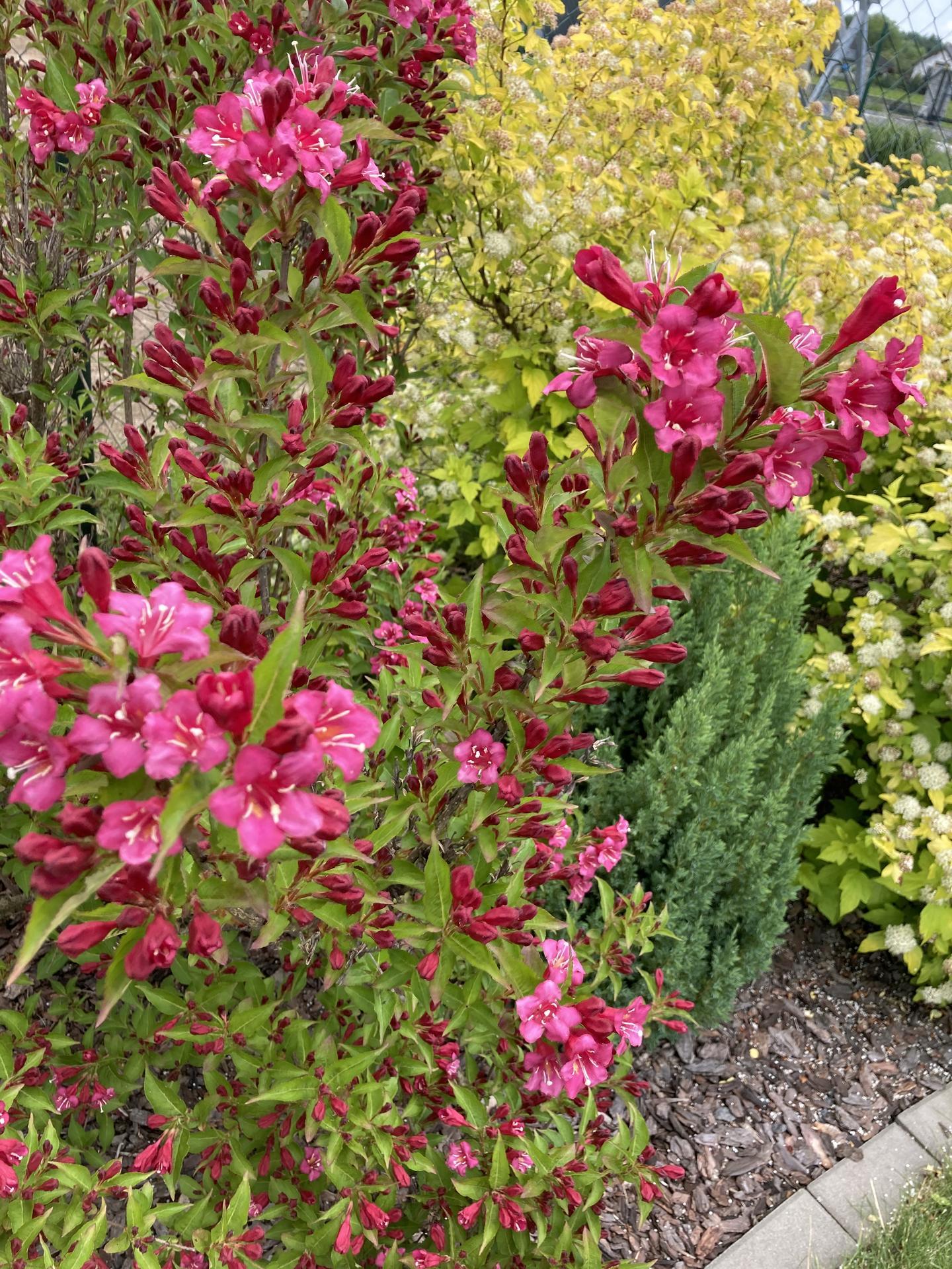 Šestý rok zahradničím - Obrázek č. 55