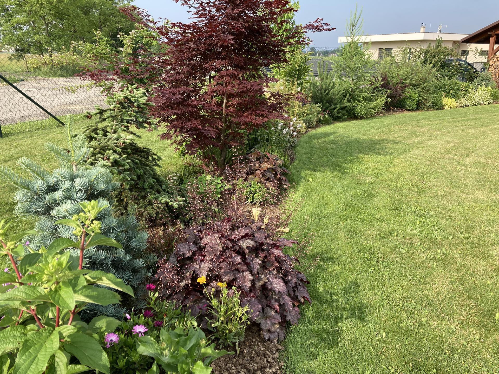 Šestý rok zahradničím - Obrázek č. 70
