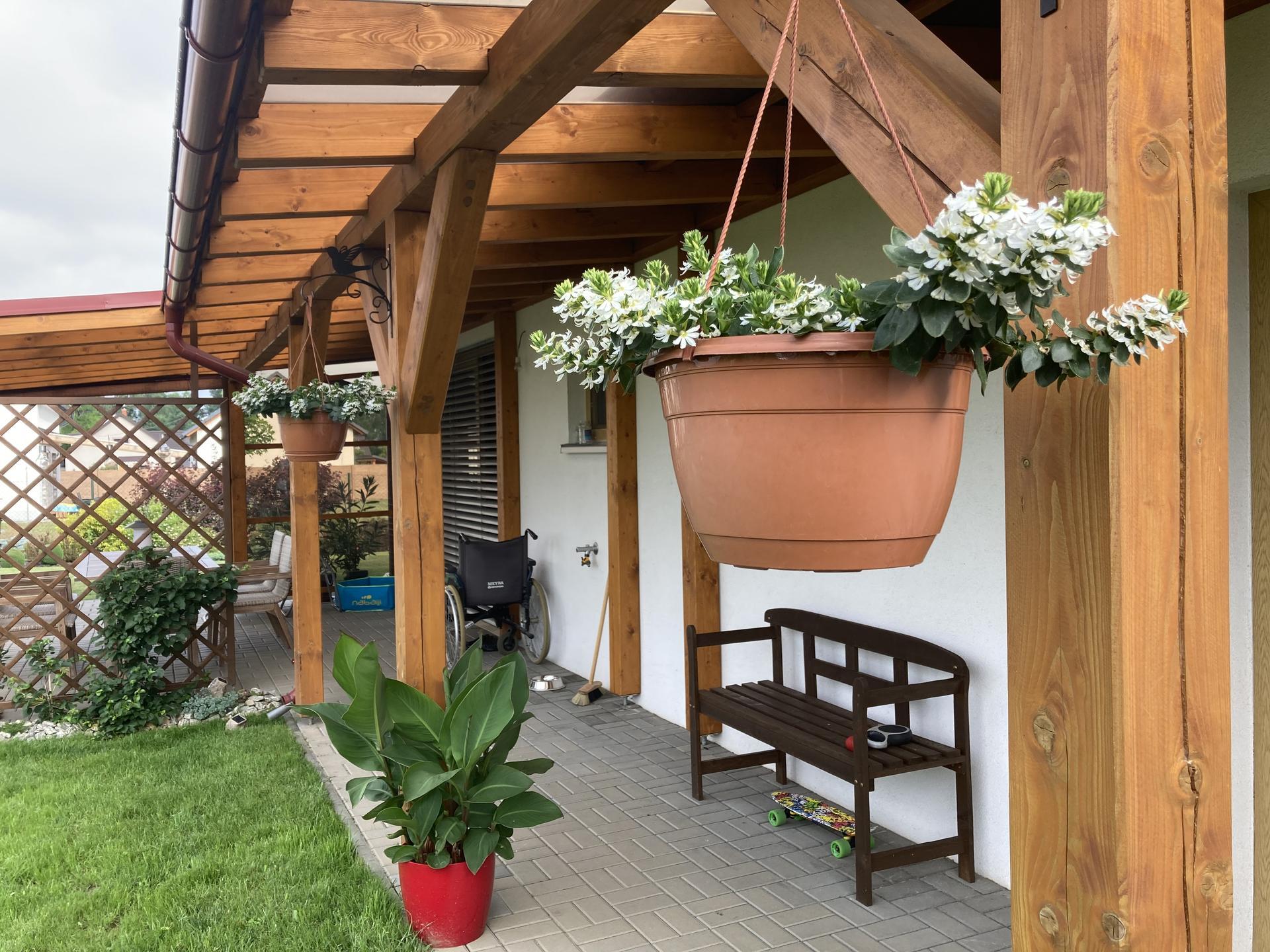 Šestý rok zahradničím - letos mám poprvé vějířovku bílou