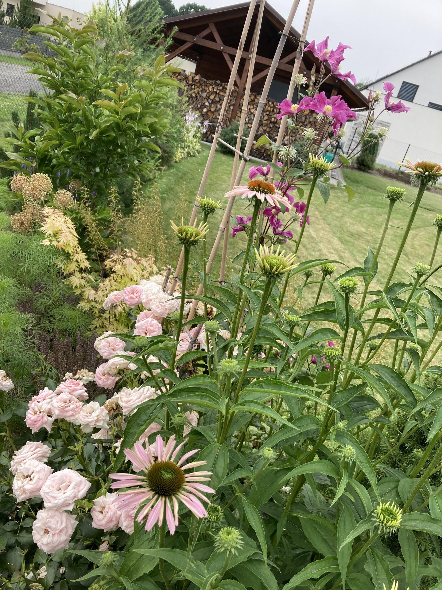 Šestý rok zahradničím - Obrázek č. 91
