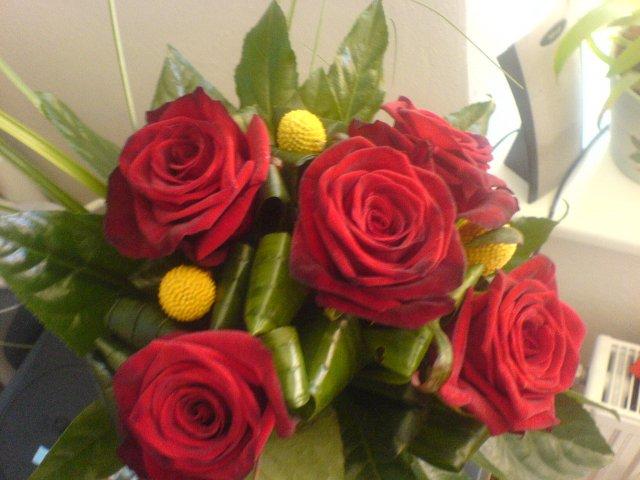 8. 9. 2007 Mája a Romik - takovou kytičku jsem dostala dneska k narozeninám :)
