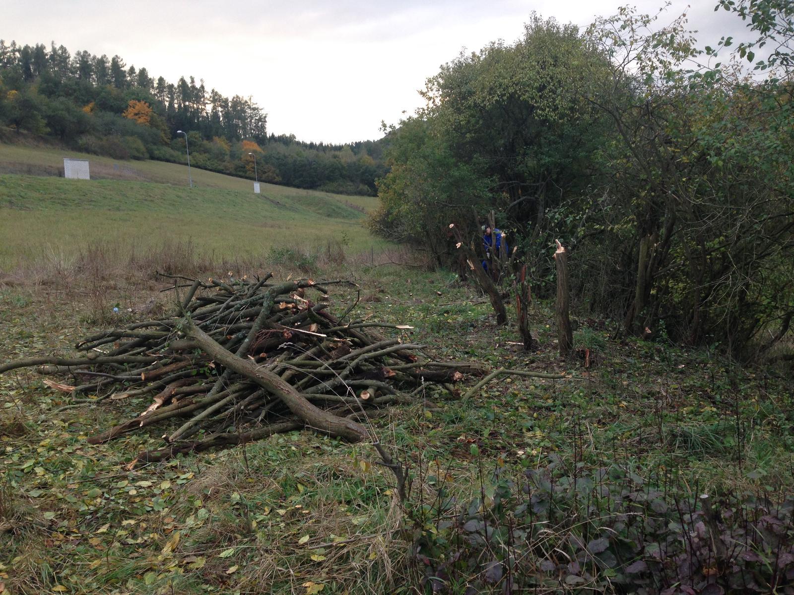 Zhyň ty trnko roztahovačná, aneb pokořili jsme náletové křoví, které ubíralo nejen našemu pozemku, ale i okolním vzrostlým dubům... - Obrázek č. 2