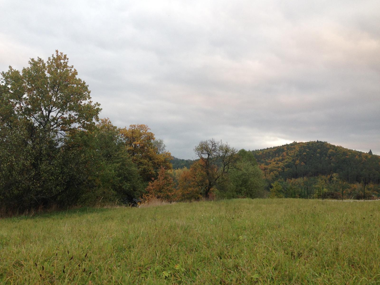 Zhyň ty trnko roztahovačná, aneb pokořili jsme náletové křoví, které ubíralo nejen našemu pozemku, ale i okolním vzrostlým dubům... - Obrázek č. 3