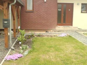 2.5.2012 tulipány už odvetly , teď kvete bergenie, srdcovka, zběhovec a floxy