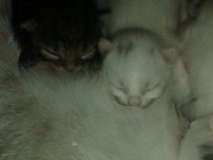 Max x Min koťata v detailu  (Největší a Nejmenší)