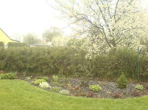 """""""nasněžilo""""      ( 1.5.   krásně čerstvě se zelenají pryšce )"""