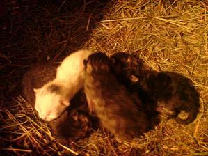 v neděli 5.5.  se narodilo  pět koťátek naší Kiki.....jaro je opravdu tady :-)