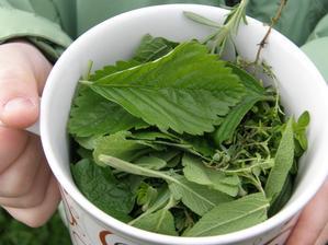 děti sesbíraly na bylinkový čaj