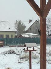 spoluuživatelé zahrady - zimní vykrmování :-)