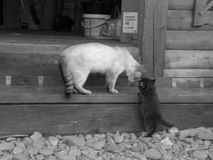 """""""Vidíš, já už jsem nahoře ! Tak to hezky zopakuj po mně! """""""