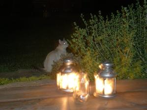 Kiki zvědavá na světýlka