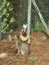 loni jsme neznámým způsobem přišli o Kiki a malého kocourka.... Fido dlouho nezůstal sám... máme Augustinu, která ctí jméno ze dne , kdy se k nám jako kotě přitoulala a pak se přitoulal Mourek