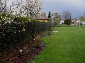 mám ráda kontrast bílých květů na stromech, jarní zelené a zamračeného nebe
