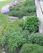 bylinky u terasy.... stačí jen vyběhnout z kuchyně :-)