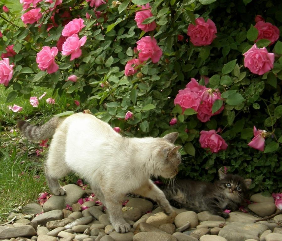Zéphirin Drouhin - kočičáci milují její stín
