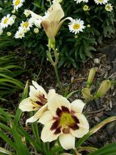 už nekvete jen jeden květ, už je jich za 1 den víc :-)