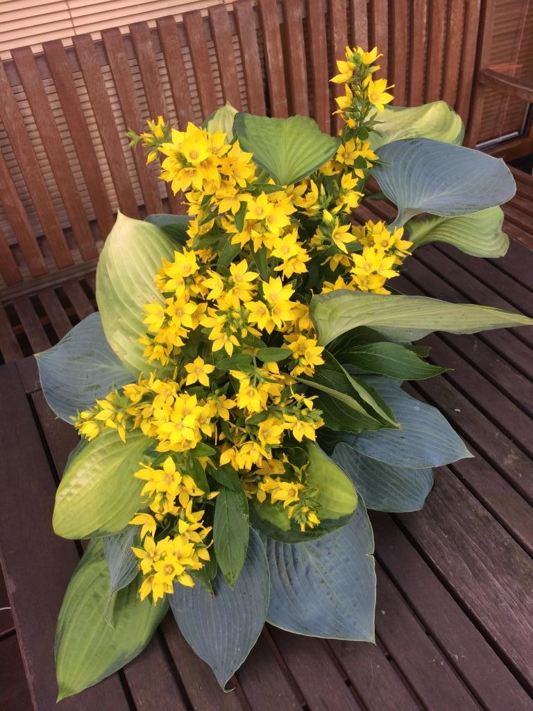 Dekorace z květin Pro radost - zkouška jak dlouho vydrží listy hosty napíchané do florexu, vrbina zrovna kvetla...... hosty vydrží, vrbina ne