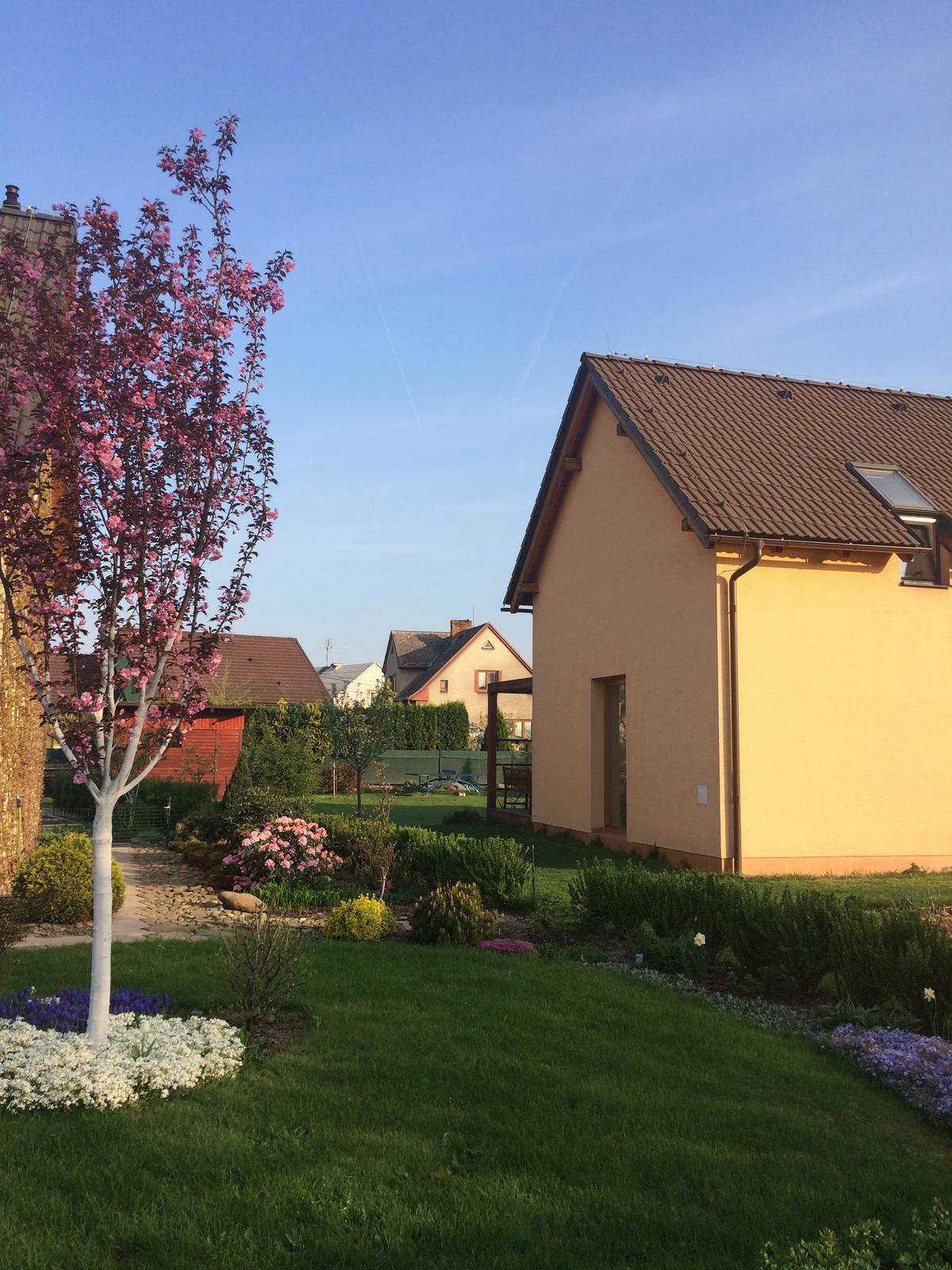 Zahrada 2018 - rozkvetla sakura i floxy