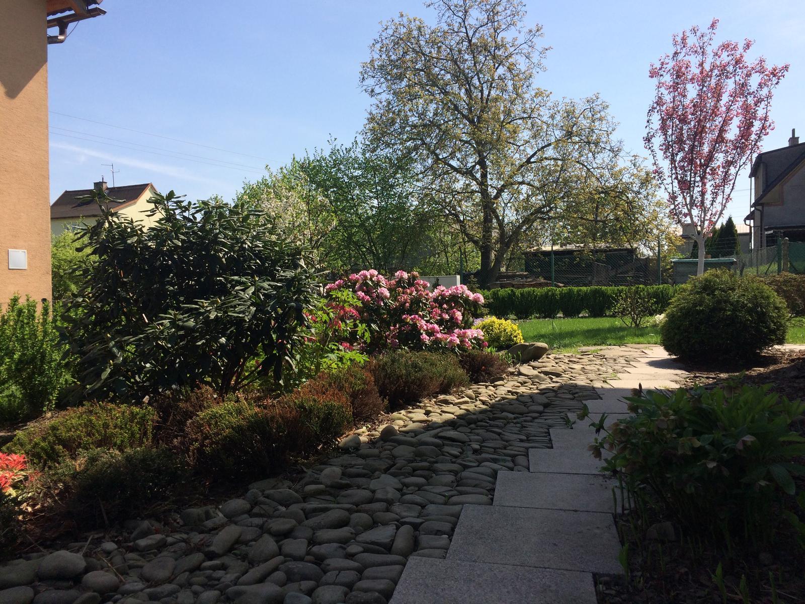 Zahrada 2018 - Obrázek č. 59
