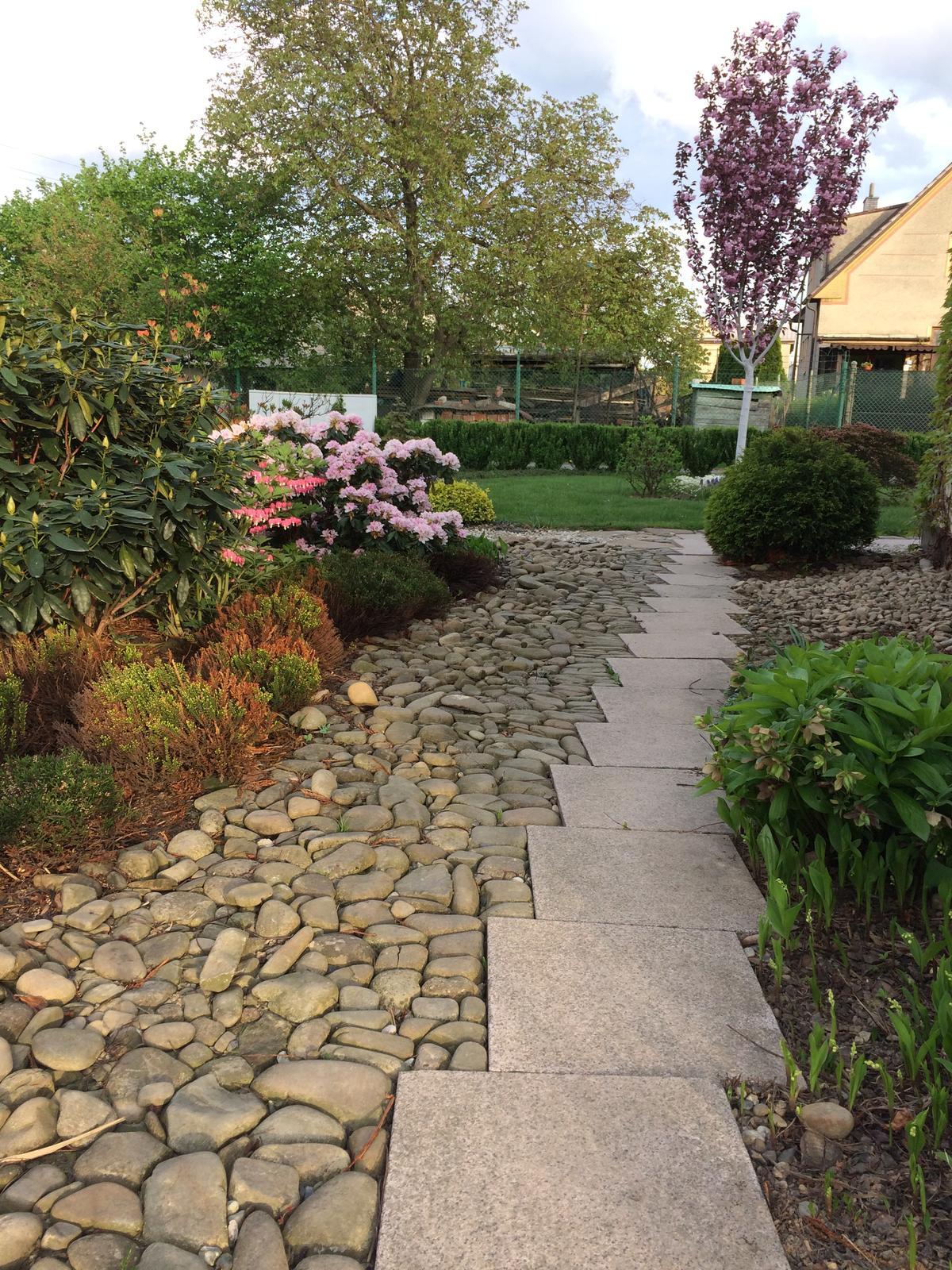 Zahrada 2018 - Záhon s rododendrony, pierisy, vřesy, konvalinkami.....severovýchodní strana domu