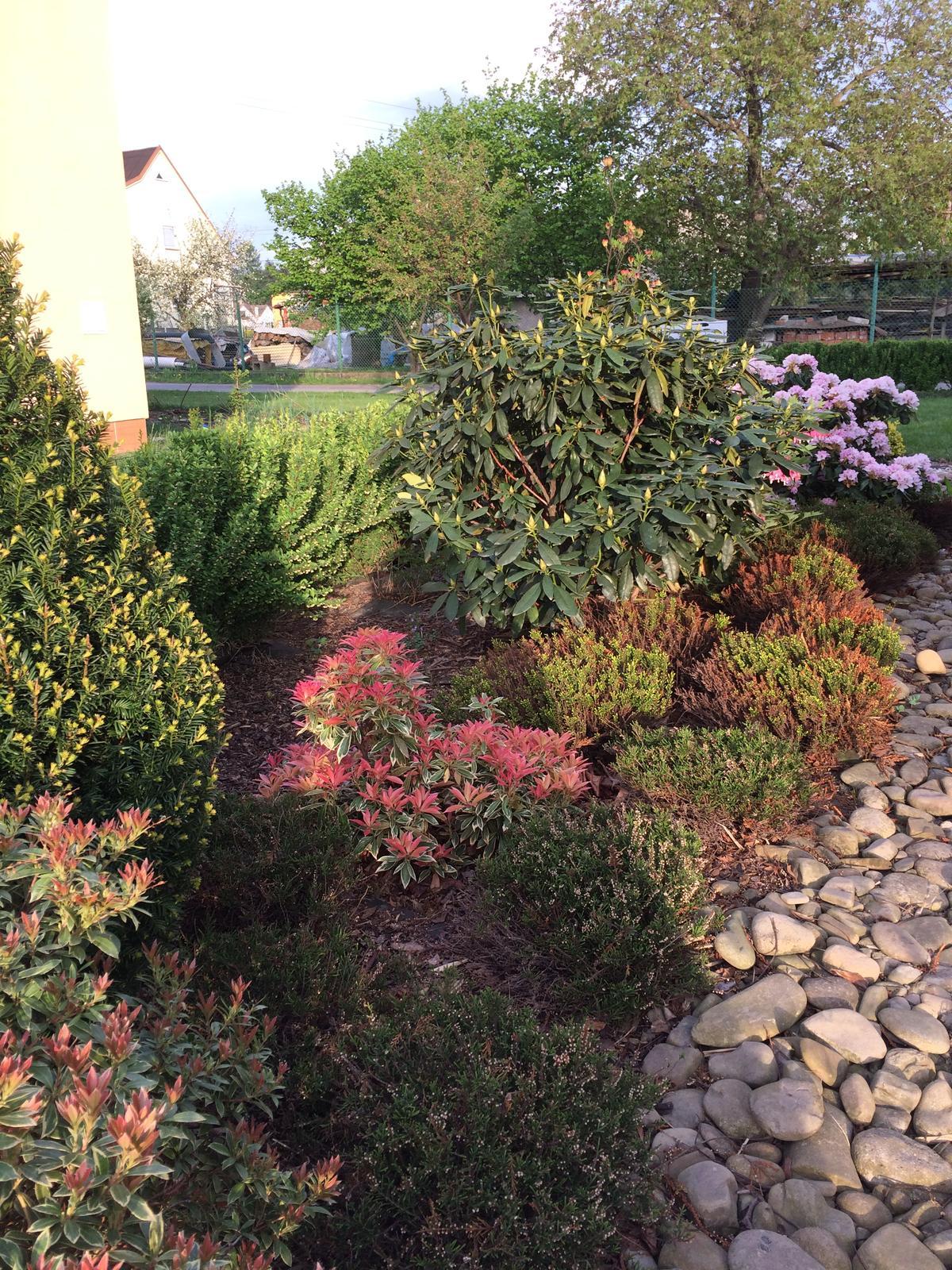 Zahrada 2018 - večerní slunko...vřesy to v zimě schytaly... tak uvidíme , jestli trochu obrostou , do konce léta mají ještě čas