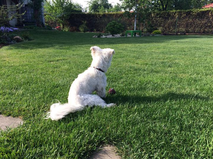 To naše bílé chlupaté kvítko mě baví, je mu 1 rok a když sedí, vypadá pořád jako štěně 😂🐾