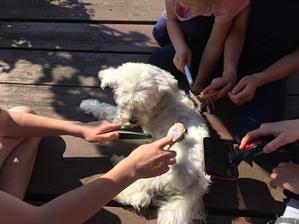 4 děti a pes a 5 hřebenů .... psí trpělivost