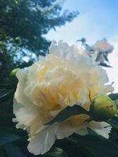 ...květy jednoho keře