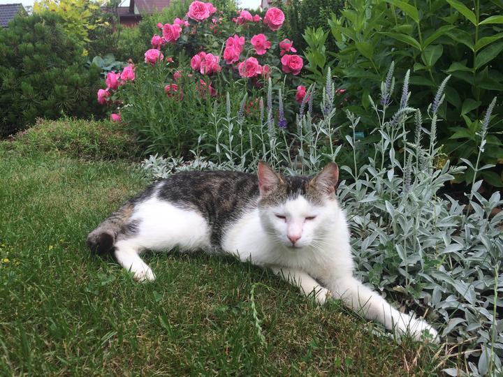 Trocha kočičího pózování s růží