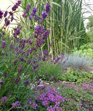 Matřidouška pod levandulí, trávy a sedum