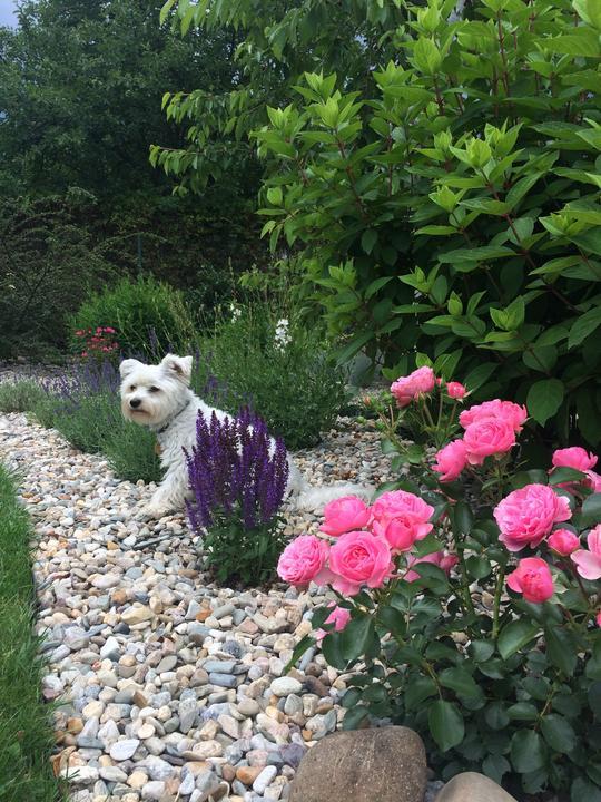 Zahradní fotoateliér