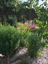 K echinacei se přidává oranžová montbrecie/crocosmia/