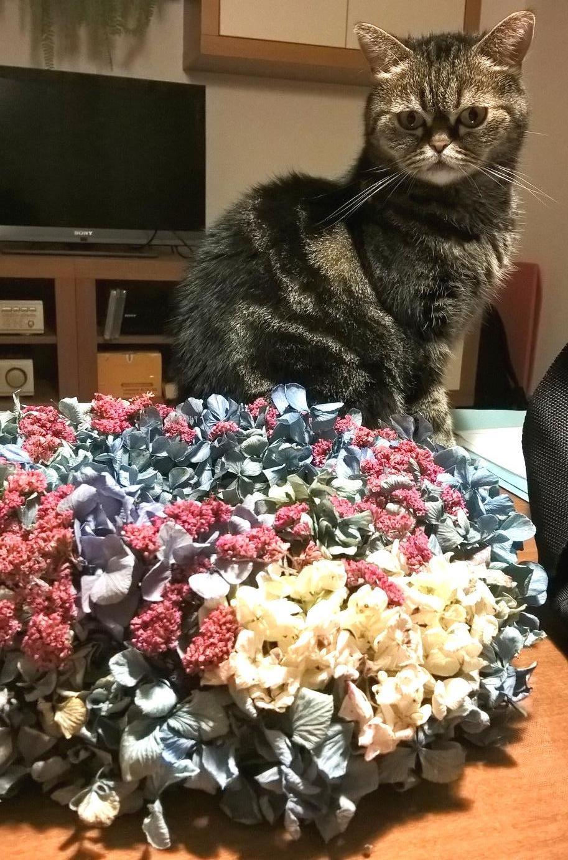 Dekorace z květin Pro radost - už má svůj domov u kamarádky