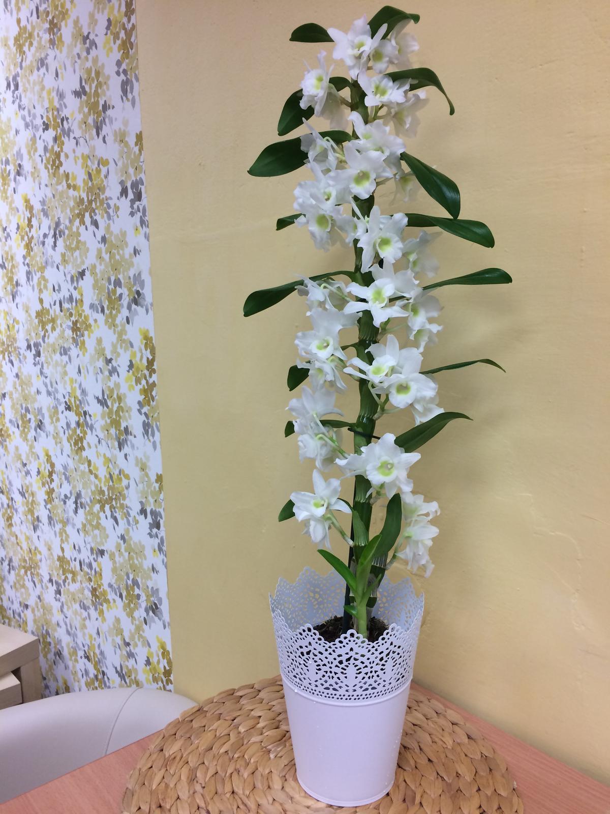 Dekorace z květin Pro radost - tuhle jsem dostala k narozkám a krášlí mi kancelář ....