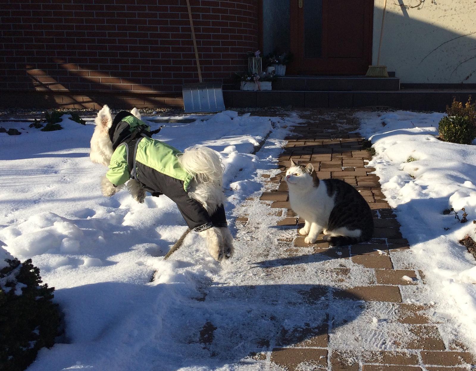 Dům i Zahrada 2019 - kocour asi obdivuje lítacího psa