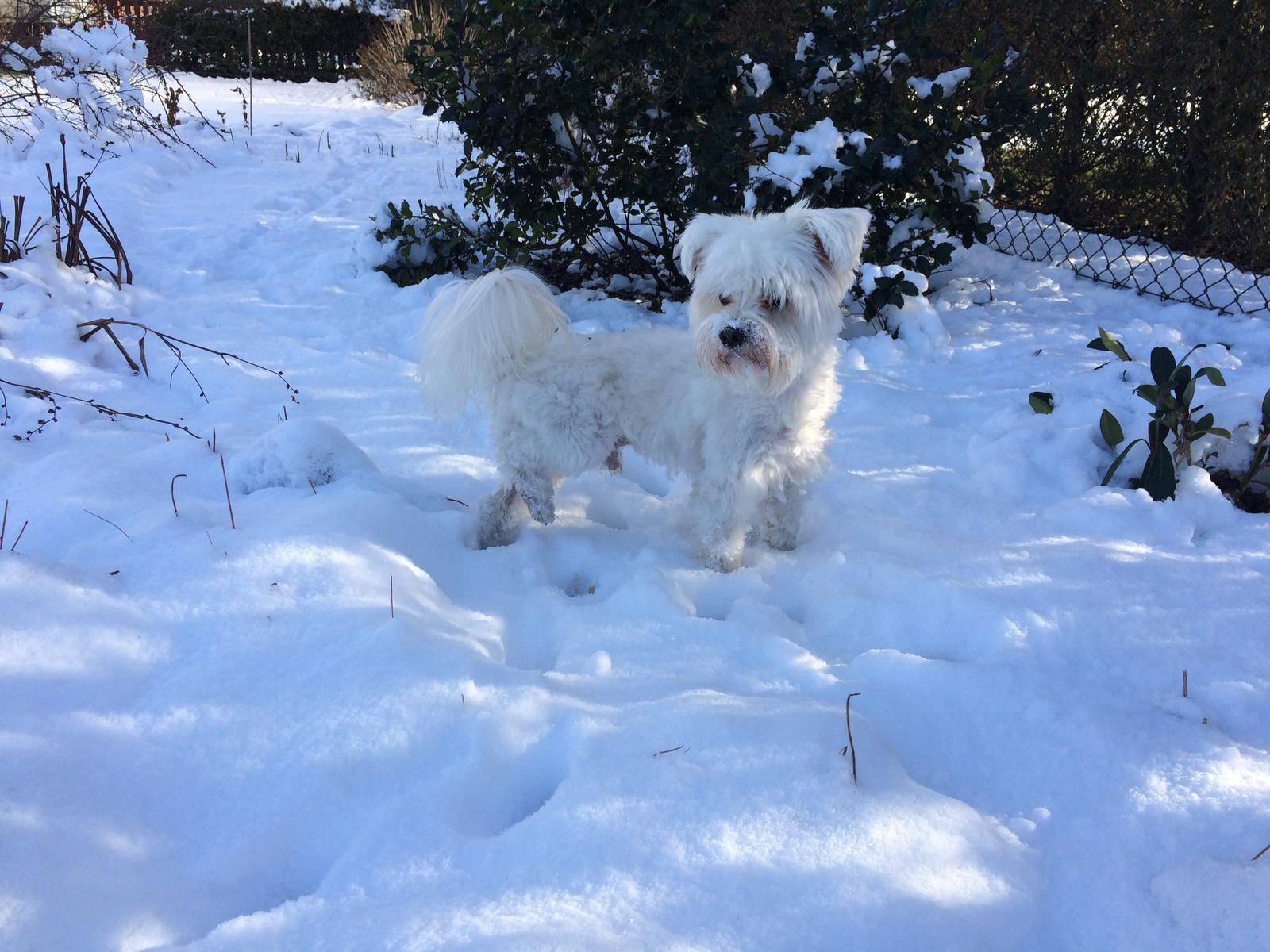 Dům i Zahrada 2019 - Chvilku svítí slunko, chvilku sněží ....