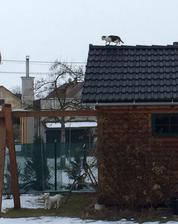 ....za chvilku zas je pod mrakem a.... kocour v čudu, na střeše , pes dole marně hleda