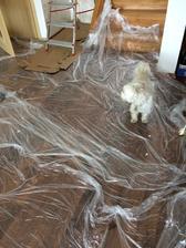 plná polní v malování, pes dostal žvýkací kost aby dal pokoj a hledá, kde si ji schovat