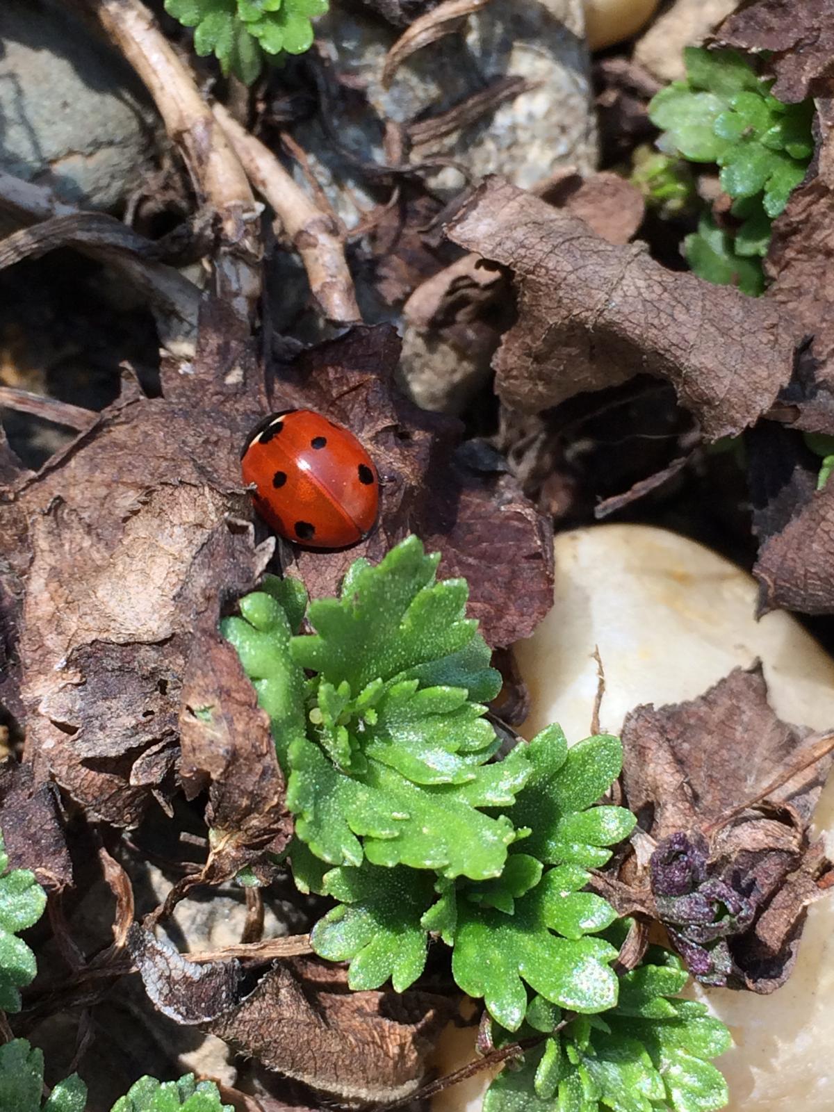 Dům i Zahrada 2019 - Bedrunka a rašící skalničkové kopretinkové chrysantémky