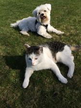 jedna skoro reklamní na psa a kočku 🐶🐱