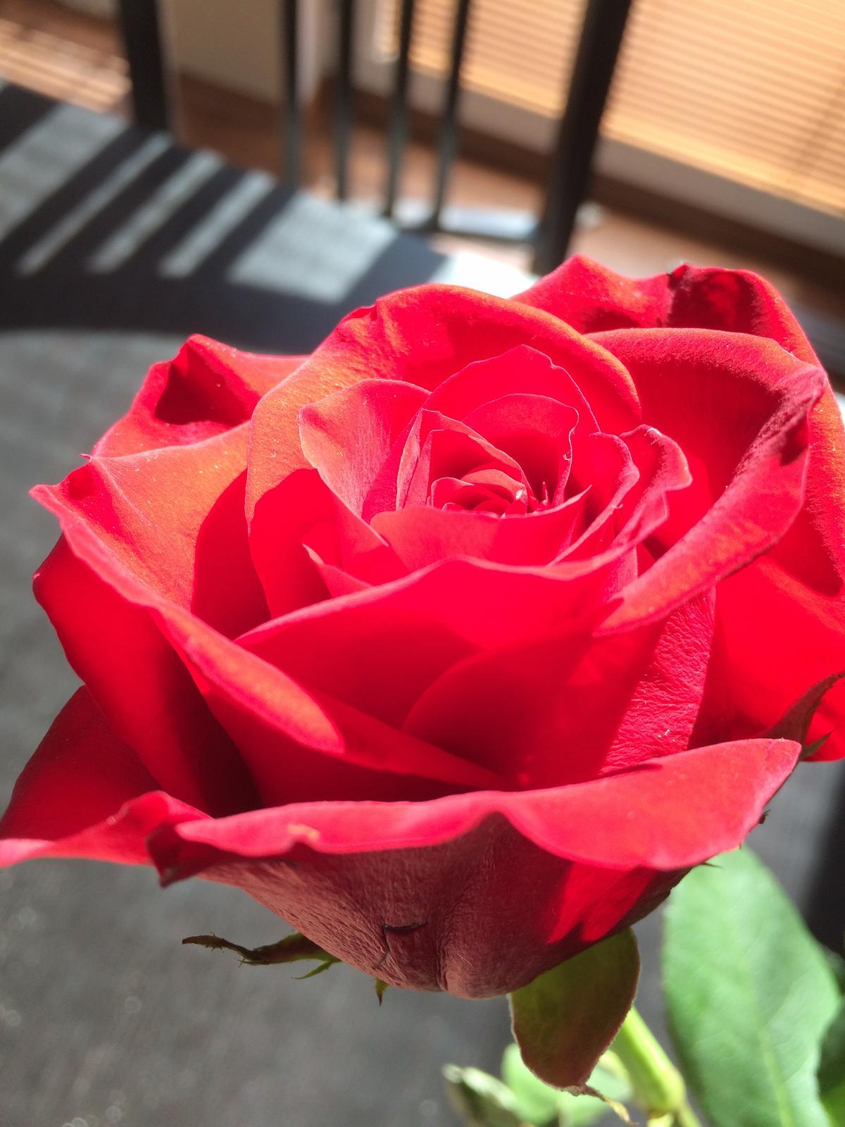 Dům i Zahrada 2019 - Dnes byl krásný pracovní den, ráno jsem od manžela dostala tuhle🌹, pak můj muž maloval předsíň, dcerka mi pomyla okna, nejmladší uvařil špageťáky a  já mohla být celý den venku na zahradě
