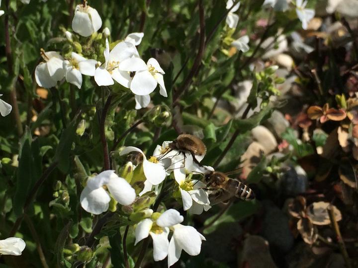 Tohle se mi asi zase hned tak nepovede vyfotit, včela a myslím, že mladá dlouhozobka... najednou