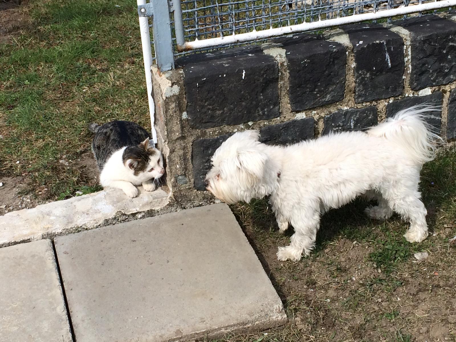 Dům i Zahrada 2019 - Švagrův kocour miluje  číhat a vyskakovat ze skrýší na našeho hafa.... tady nestíhá skočit, pes ho odhalil