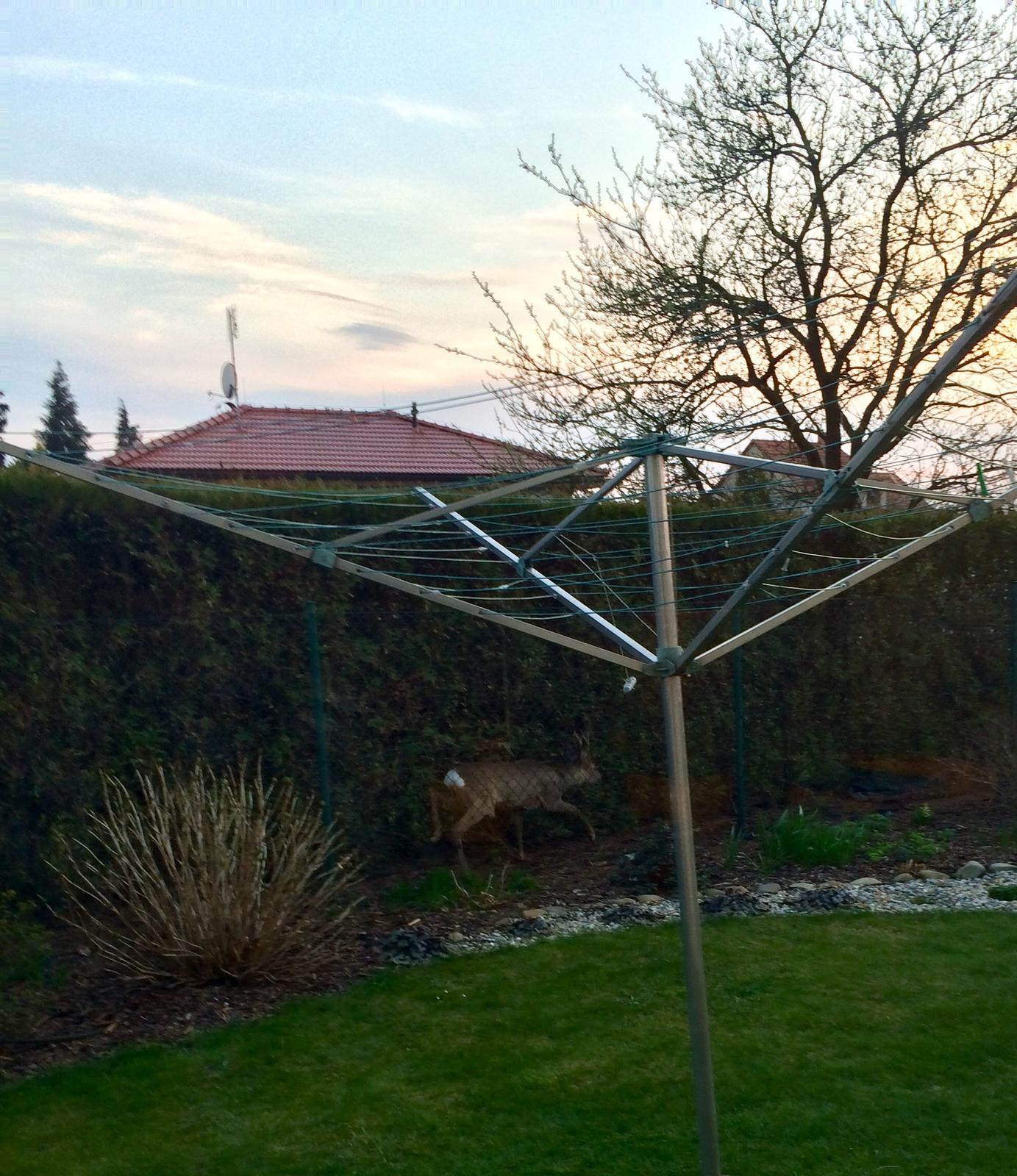 Dům i Zahrada 2019 - Srnec u souseda za plotem, vcelku v centru obce, zapomněl si zavřít bránu... pes ho málem sežral 🤪🤣