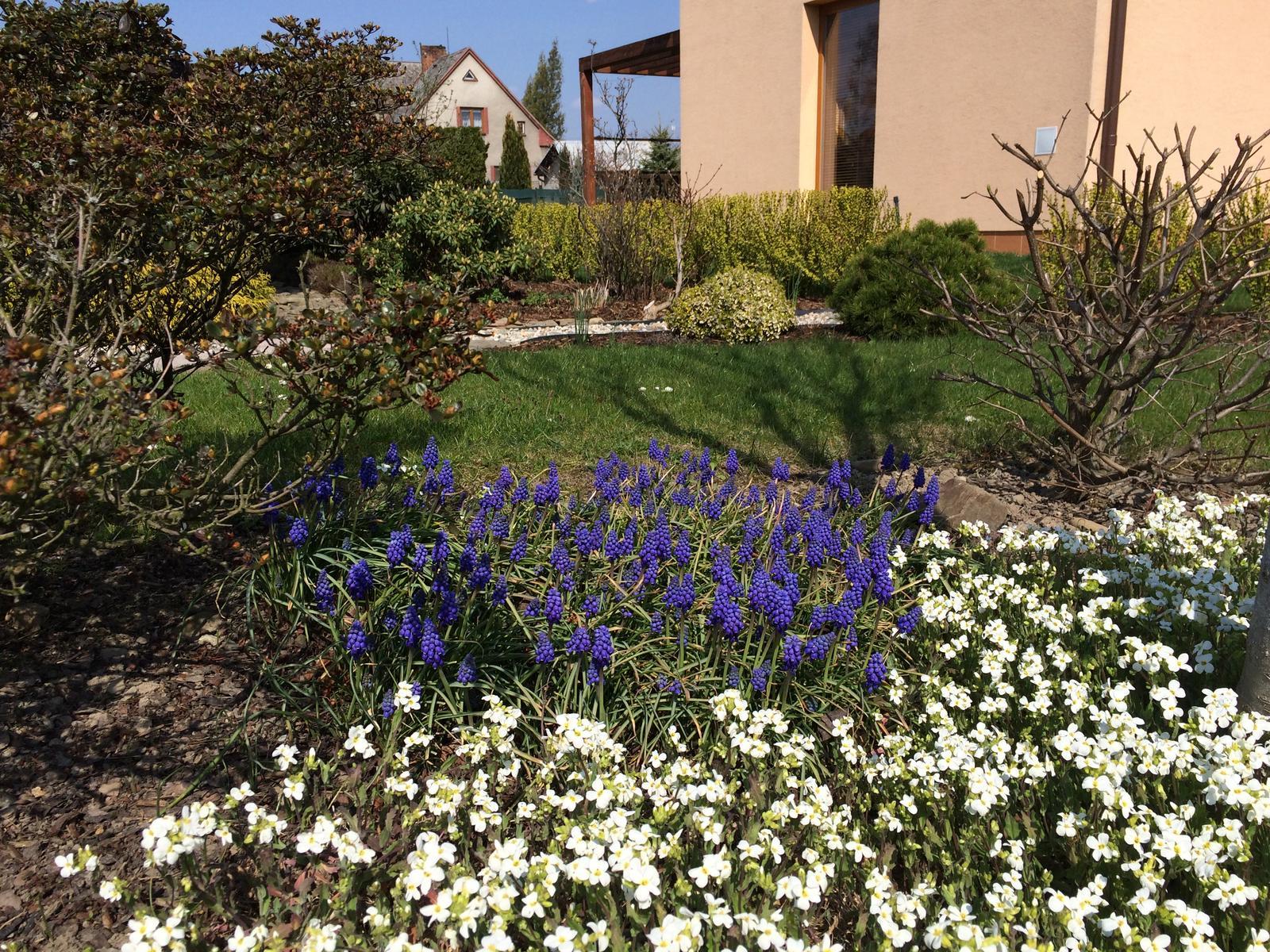 Dům i Zahrada 2019 - Hudebník a modřence