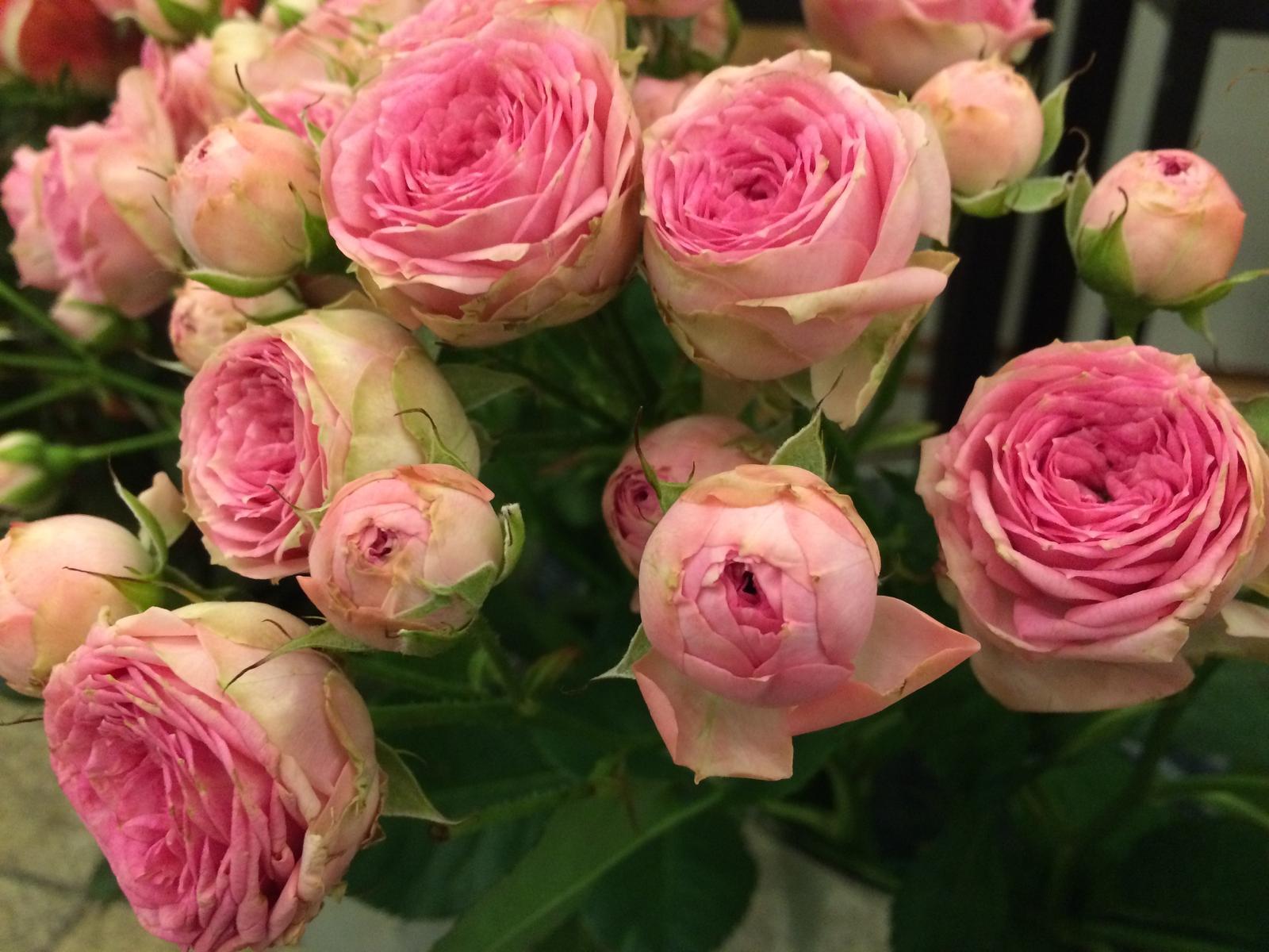 Dekorace z květin Pro radost - Mnohokvěté růžičky - i sušené jsou krásné a dá se s nimi čarovat